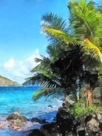 Caribbean - Palm Trees and Beach St. Thomas VI by Susan Savad