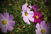Blumenwiese-2015-10-002b-6000b