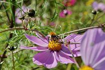 Blumenwiese-2015-10-003-6000b