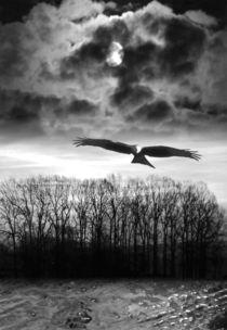 Seelenvogel von Angelika  Schütgens