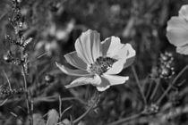 Blumenwiese-2015-10-001c-6000sw2