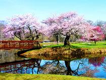 Sig-cherrytreesinthepark