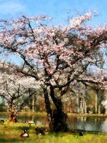 Fa-geeseunderfloweringtree