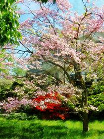 Fa-pinkfloweringdogwood2