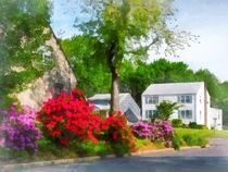 Suburban Azalea Garden by Susan Savad