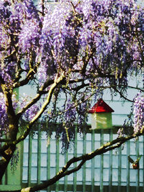 Fa-wisteriaandbirdhouse2