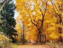 Autumn Path by Susan Savad