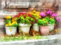 Fa-flowerpotswithautumnflowers