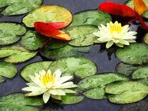 Water Lily Pond in Autumn von Susan Savad