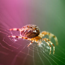 Spidery  by Rob Hawkins