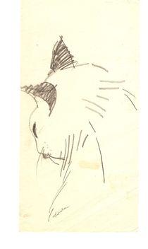 Cat by Ioana  Candea
