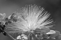Flower-monochrome-9