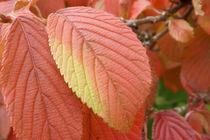 Blatt im Herbst von lorenzo-fp