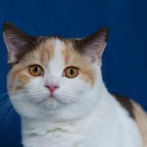 Dsc-8880-dot-bkh-kitten15-10-15