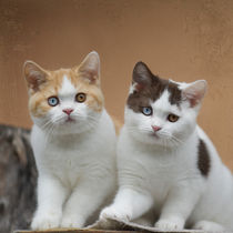 Dsc-8196-dot-2t-dot-bkh-kittens4-10-15