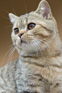 Dsc-7996-dot-bkh-kitten8-10-15