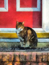 Tabby Cat by Red Door by Susan Savad