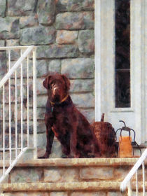 Chocolate Labrador on Porch von Susan Savad