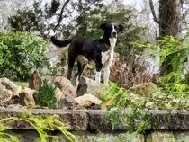 Sig-terrierstandingguard