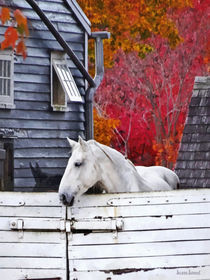 Autumn Farm With White Horse by Susan Savad