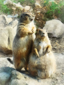 Prairie Dog Formal Portrait von Susan Savad