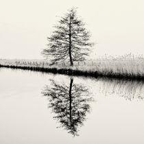 Baum #9 von J.D. Hunger
