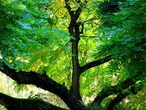 Blätterdach von Ulrike Ilse Brück