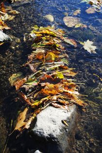 Stacked Autumn Leaves 2, 2015