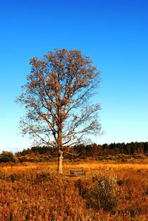 Lonely Autumn Tree, 2016 by Caitlin McGee