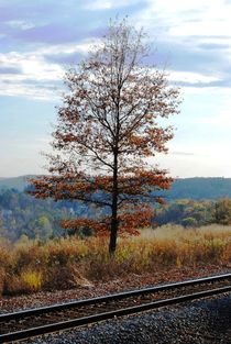 Tree and Tracks, 2015 by Caitlin McGee