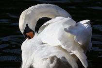 Swan-8