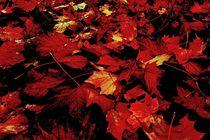 Herbstlaub-2015-10-001g-6000