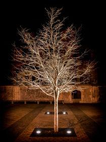 Tree 9878 von Mario Fichtner