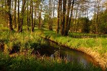 Landschaft-bach