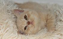 Dsc-6743-dot-bkh-kitten16-10-15