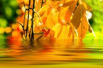Herbststimmung 4 by fraenks