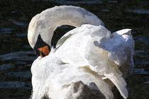 Swan-oil