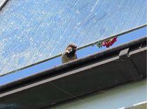 Vom-balkon-gepfiffen
