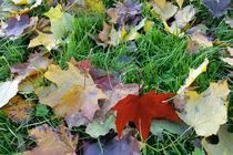 Carpet-of-leaves-bun