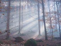 Wald-von-schoenbuech-am-01-dot-11-dot-2015-120
