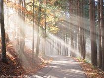Wald-von-schoenbuech-am-01-dot-11-dot-2015-131