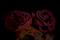 A pair of roses in neon on dark background von Peter-André Sobota