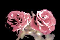 A pair of roses in pencil on dark background