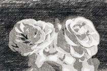 A pair of roses in sketch on dark background