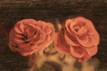 A pair of roses in sketch3 on dark background