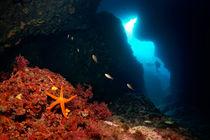 Zwei Taucher in Höhle mit Seestern by Norbert Probst