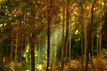 Herbstwald by darlya