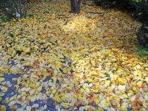 Herbstlicher Blätterteppich by Hans-Peter Scherbaum