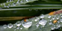 Waterdrops by Jacqueline Kolesch