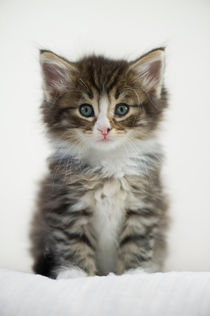 Dsc-0206-dot-nw-kitten3-10-15